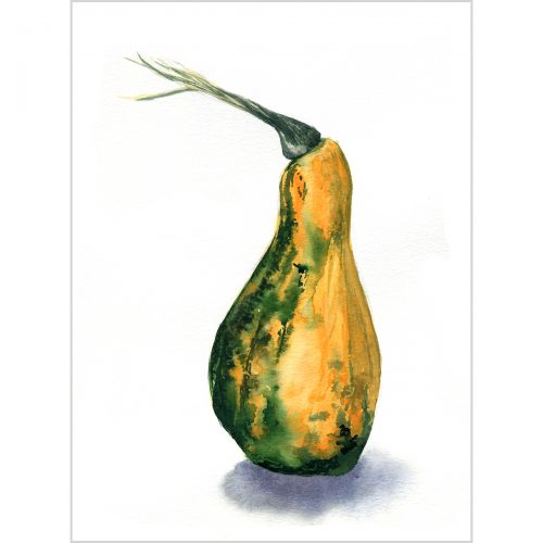 Orange-green pumpkin - original watercolor painting